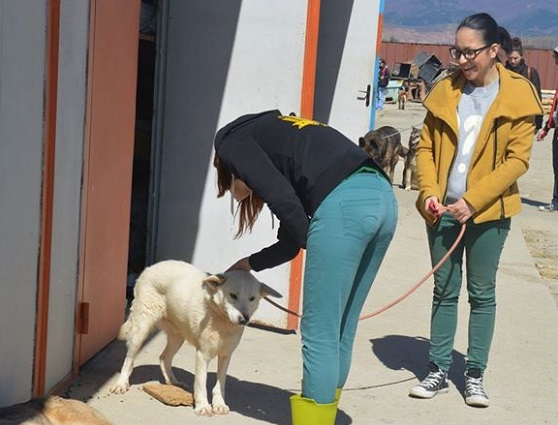 Bogy-DoggyT2